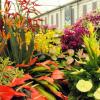 Всемирная выставка цветов