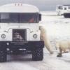 Арктическое сафари