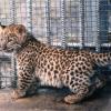Зоопарк в глубинке, полюбившийся миллионам туристов
