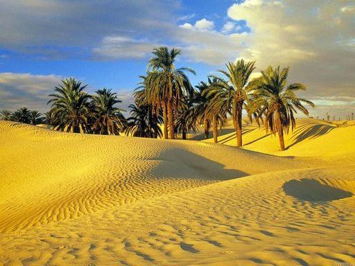 Тунис_Райский уголок