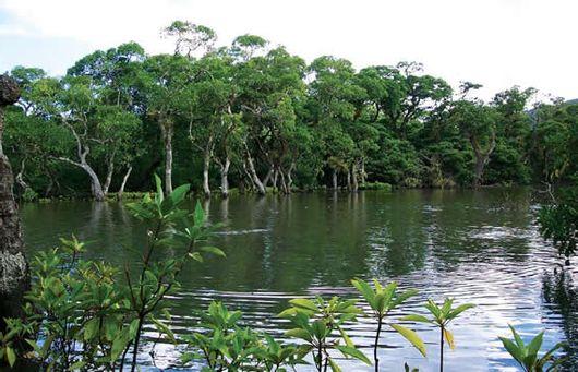 Мангровые острова