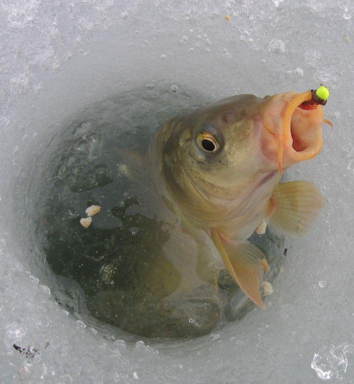 стул для зимней рыбалки