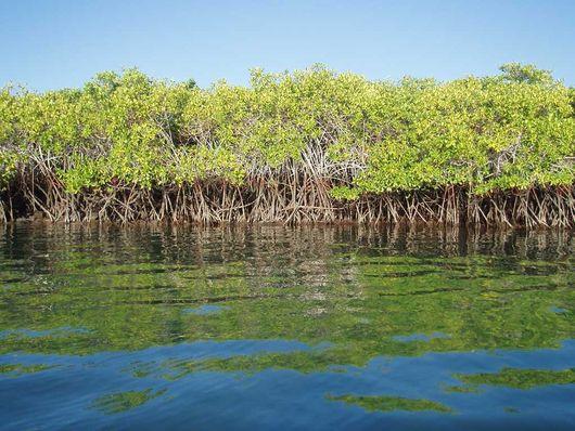 Мангровые острова, Куба