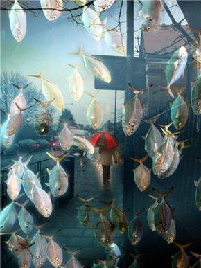 Странное происшествие в сезон дождей