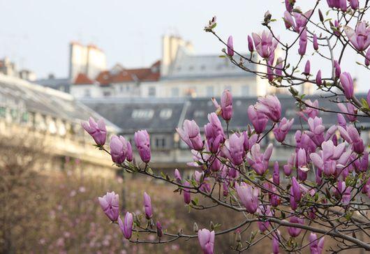 Весна во Франции