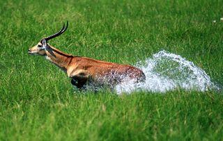 С винтовкой на антилопу: правила африканского сафари