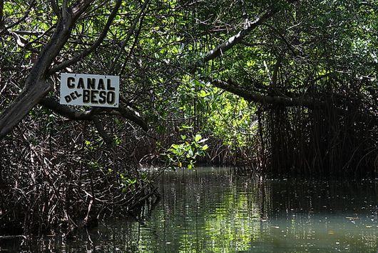 К мангровым островам