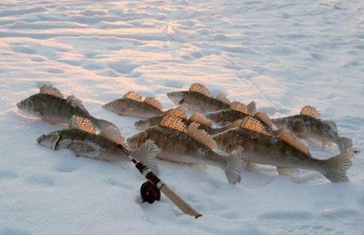 ящики для зимней рыбалки в спб